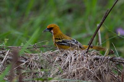 Birds - Mexico