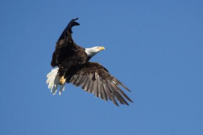 Birds, Vancouver Island
