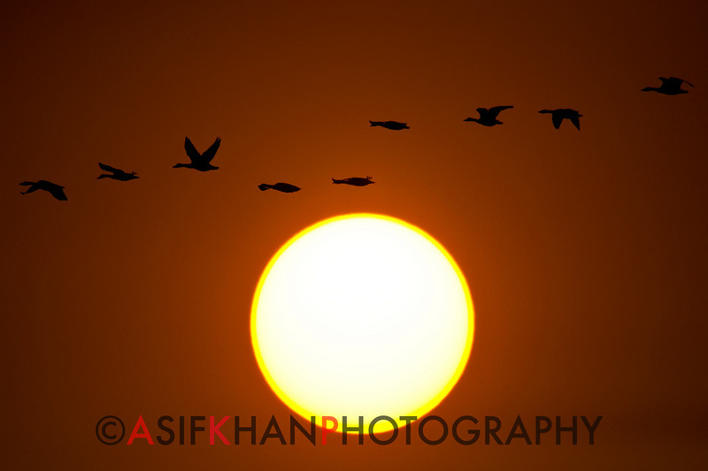 The sun sets at Poyang Wetland, Wucheng, Jiangxi, China