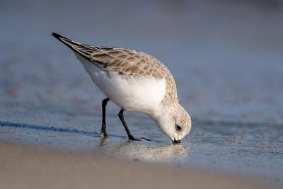 Sanderling - Perdido Beach - Pensacola, FL