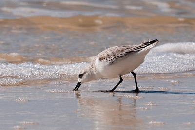 Sanderling - Mexico Beach, FL - 02