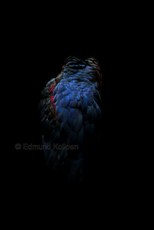 The back of an African Abdim's Stork. Taken in London Zoo. Nikon D80, 135mm lens