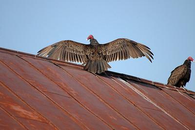Birds Summer 2007