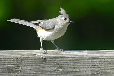 Birds Summer 2010