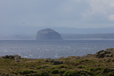 Bass rock from Isle of May