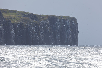 Cliffs, Isle of May