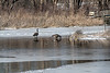Late winter snow and cold affects wetlands and their visitors
