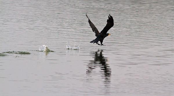 Birds at Nam Sang Wai 2011