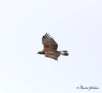 Golden Eagle - Alaska - Dalton Highway - GPS