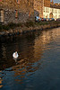 Swans on the River Corrib at sunset, with the Long Walk for a backdrop.<br /> <br /> Galway City, Ireland