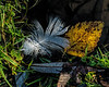 Featured:  fallen from both flora and fauna in the fall