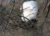 Unoccupied bird's nest.<br /> <br /> Gallup Park, Ann Arbor, Michigan.