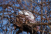 An abandoned nest.  It seemed too big to be a bird's nest.  Perhaps a squirrel?<br /> <br /> February, 2011
