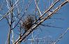 Bird's nest in winter.<br /> <br /> Squaw Creek NWR, near Mound City, Missouri.