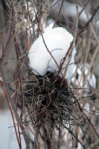 Nest A, view 2.