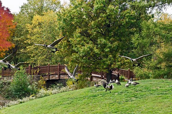 Birds - flocks