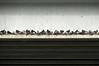 Dixboro Road Bridge resident flock of pigeons