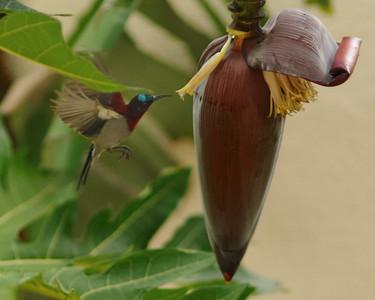 Birds from the Poco Loco Jungle