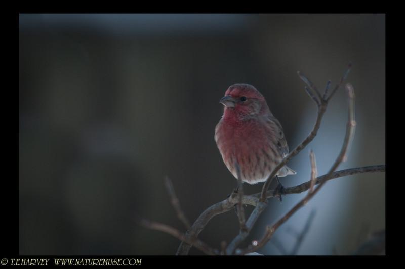 Finch peering