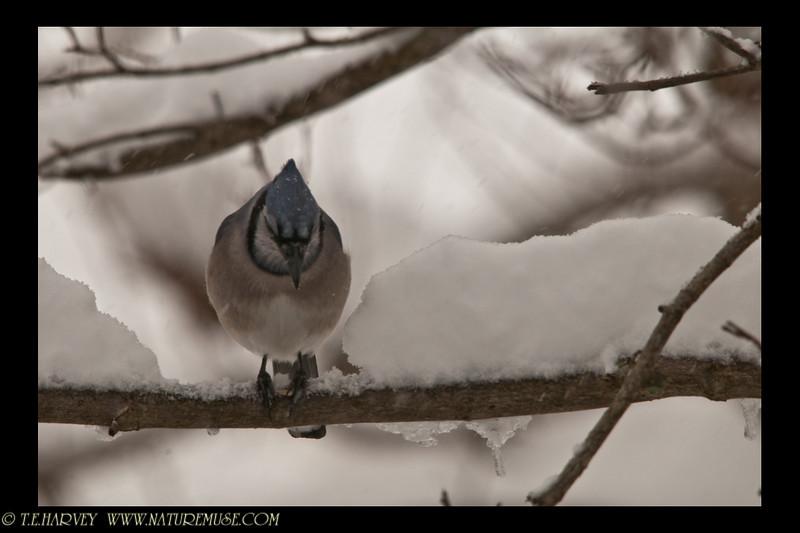 Pausing while enjoying the seed