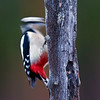 The woodpecker is captured in 1/50 sek.