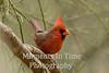 Cardinal northern