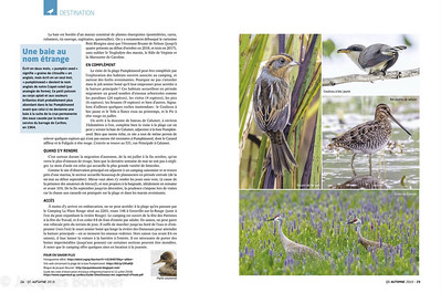 2019 u QuébecOiseaux Automne 2019  SVP voir mes photos qui accompagnent cet excellent article sur Pumpkinseed de Daniel Toussaint.   See my photos that accompany Daniel Toussaint's excellent article on Pumpkinseed.