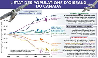RAPPORT DE L'ÉTAT DES POPULATIONS D'OISEAUX DU  CANADA 2019 (en français et en anglais)