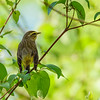a Palm Warbler at Eagle Creek Park