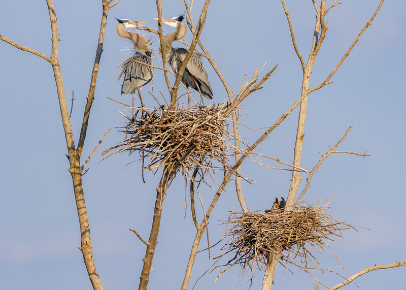 sharing spaces!! at Highland's Heron Rookery, Highland, IN