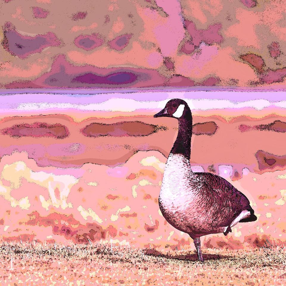 Goose at Rest