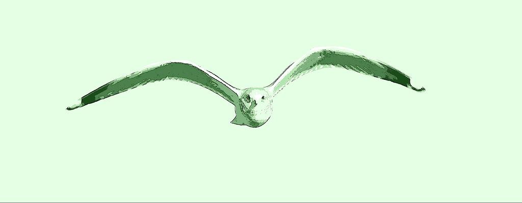 Gull in Flight 2