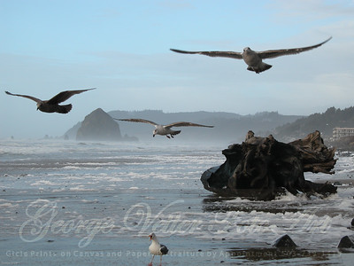 Birds of Cannon Beach