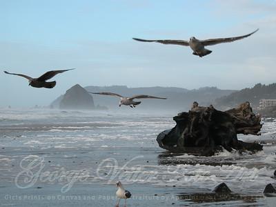 Birds of Cannon Beach