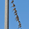 Mourning Doves perched on a an electric line on a cool Fall morning