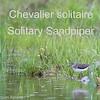 Chevalier solitaire - Solitary Sandpiper