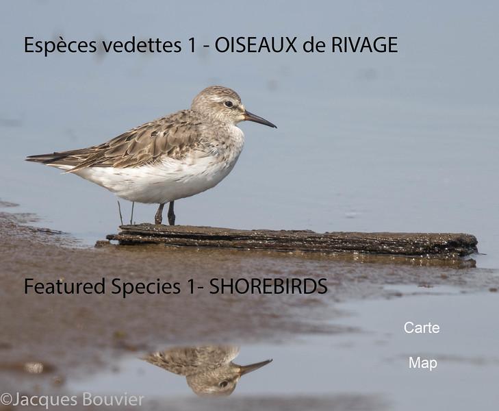 Espèces vedettes 1 - Featured Species 1