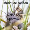 Bruant de Nelson - Nelson's Sparrow