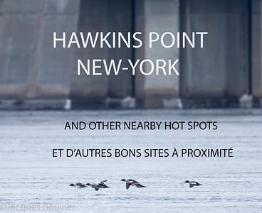 LES VEDETTES: oiseaux aquatiques tels Plongeon huard, les grèbes, les macreuses, Harelde kakawi etc...  VISITEURS RARES: Durant l'apogée des beaux jours à partir du milieu des années 1980 jusqu'au milieu des années 1990, avant que les pêcheries se dégradent, ces sites étaient un oasis pour les espèces extrêmement rares.  Les visiteurs rares dans les bons sites autour du barrage hydroélectrique Moses-Saunders dont Hawkins Point sont Guillemot à long bec, Macareux moine, Fulmar boréal, Fou de bassan, Petit Pingouin, Labbe pomarin, Labbe parasite, Grand Cormoran, Mouette tridactyle, Goéland de Californie et Mouette de Sabine pour en nommer que quelques-uns.  MEILLEURS TEMPS: automne au printemps  SERVICES: beaucoup à Cornwall et Massena  INFO: pour voir le guide détaillé des sites de miroise autour du barrage cliquez sur ce lien (en anglais):  http://www.ofo.ca/ofo-docs/MosesSaunders.pdf    FEATURED SPECIES:  waterbirds such as Common Loon, grebes, scoters, Long-tailed Duck etc...  RARITIES: During the peak of activity  from the mid-1980s to mid-1990s, the Moses-Saunders Power Dam  was an oasis for rarities before the local fish ecology changed.  Highlights included Long-billed Murrelet, Atlantic Puffin, Northern Fulmar, Northern Gannet, Razorbill, Pomarine Jaeger, Parasitic Jaeger, Great Cormorant, Red Phalarope, Black-legged Kittiwake, Black-headed, Franklin's, California, Sabine's and Little Gulls. Unfortunately, the Cornwall dam area doesn't attract the same number of birds nowadays.  WHEN TO GO: fall to spring.  SEVICES: Lots in Cornwall and Massena.  INFO:  to see the detailed site guide to the Moses-Saunders Dam area please click on link:  http://www.ofo.ca/ofo-docs/MosesSaunders.pDF