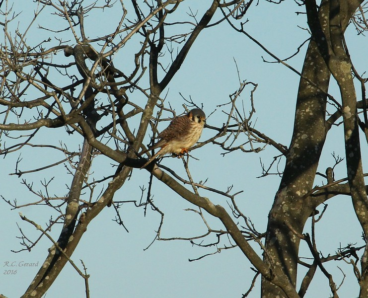 Kestral at West Beach