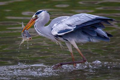 Birds of Nam Sang Wai 2014/5