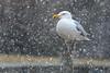 HEGU in a snowstorm-0348