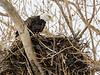 BAEA nest-0501