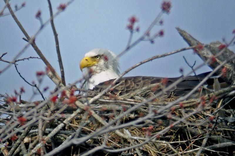 Eagles nest DSC03785-Edit