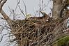Eagle's nest DSC_0658-1