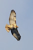 Red-tail flyover