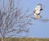 RTHA on tree-7753