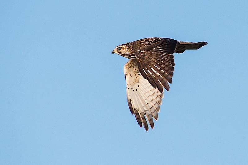 Broad-wing take-off