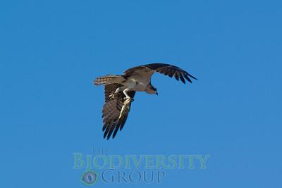 Biodiversity Group, Bahia Kino-0086