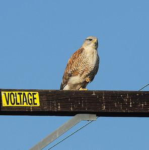 Mesa Grande, San Diego County, CA 12/24/2009